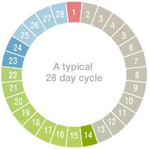 28 Day Cycle